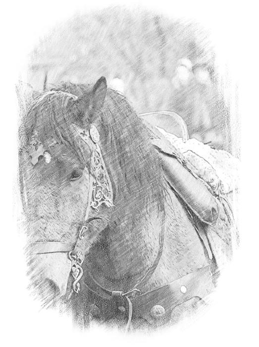 A_horse.jpg