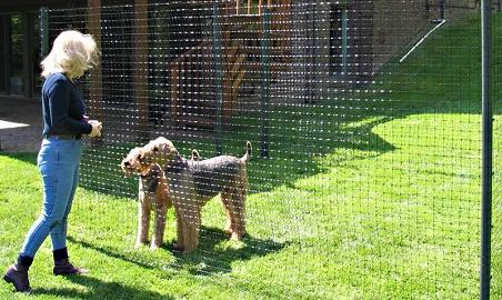 best in ground dog fence