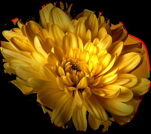 tubes_fleurs_tiram_614