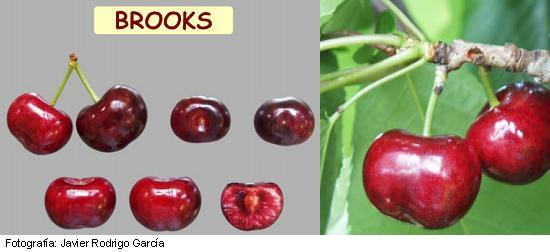 Brooks cherry, cherry variety Brooks