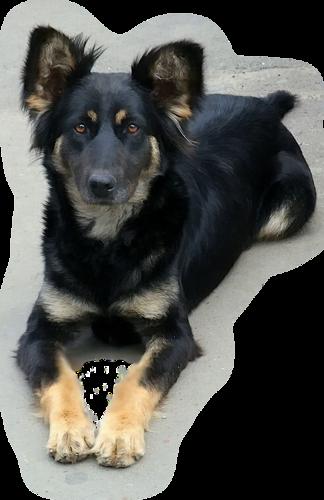 chien_tiram_216