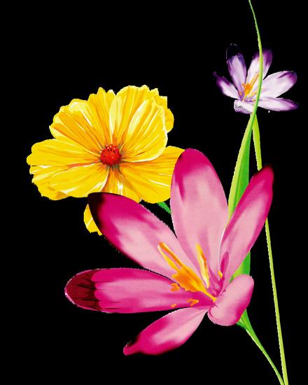 tubes_fleurs_tiram_95