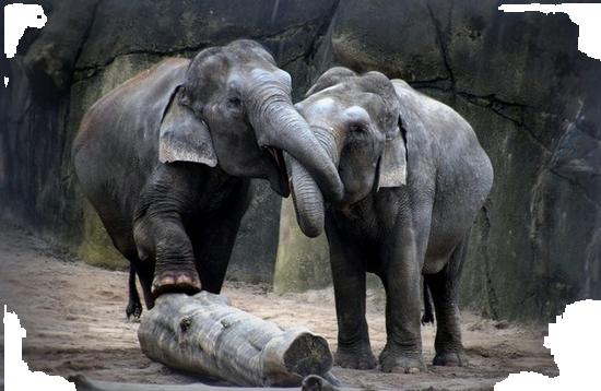 tubes_elephants_tiram_70