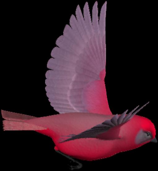 tubes_oiseaux_tiram_213