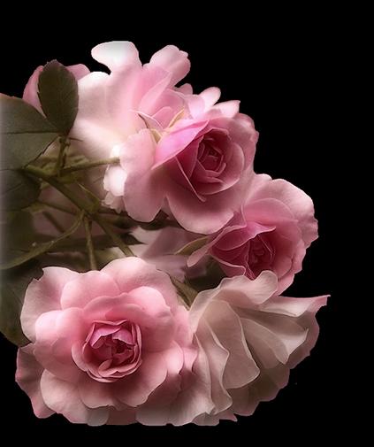 tubes_fleurs_tiram_261