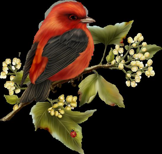 tubes_oiseaux_tiram_139