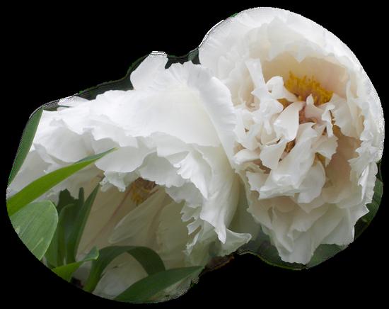 tubes_fleurs_tiram_202