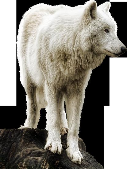 animaux-noel-tiram-68