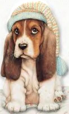 chien_tiram_419