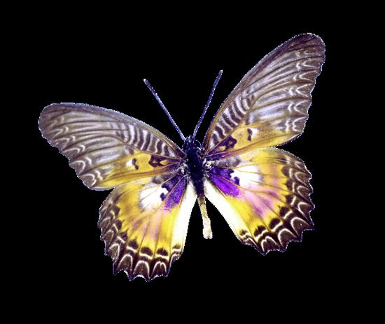 tubes_papillon_tiram_190