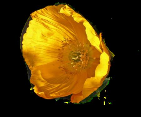 tubes_fleurs_tiram_831