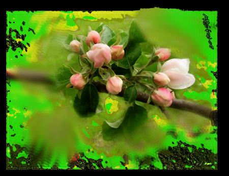 tubes_fleurs_tiram_724