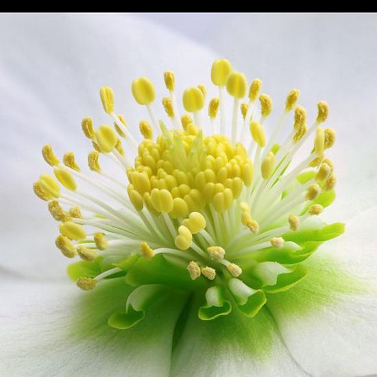 tubes_fleurs_tiram_281