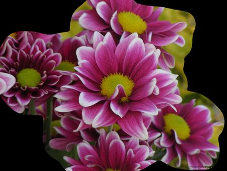 tubes_fleurs_tiram_893