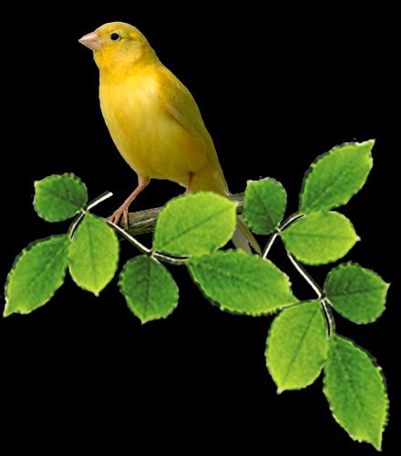 tubes_oiseaux_tiram_8