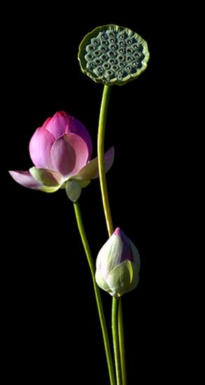 tubes_fleurs_tiram_504