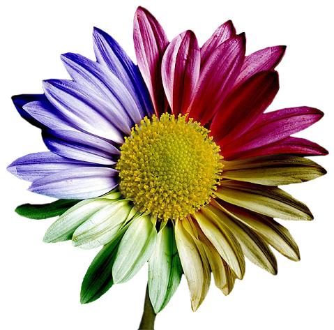 tubes_fleurs_tiram_742