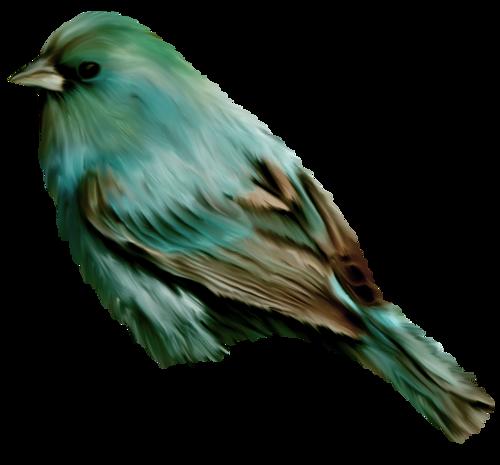 tubes_oiseaux_tiram_39