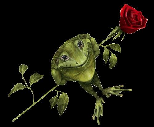 grenouille_tiram_102