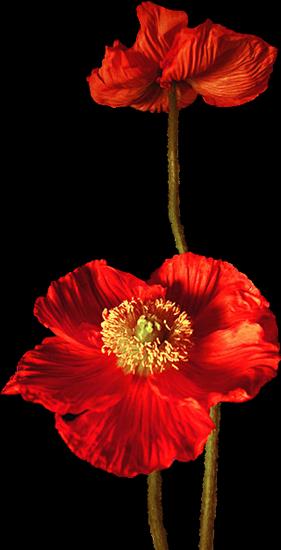 tubes_fleurs_tiram_80