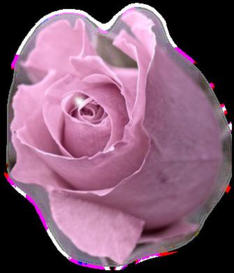 tubes_fleurs_saint_valentin_tiram_292
