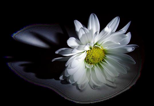 tubes_fleurs_tiram_655