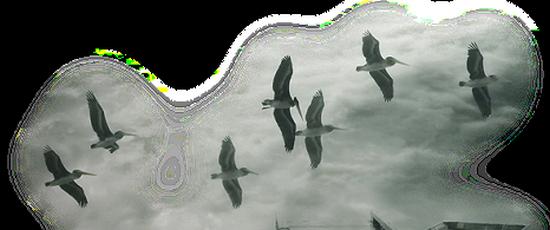 tubes_oiseaux_tiram_197