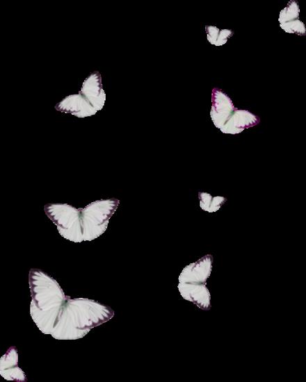 tubes_papillon_tiram_325