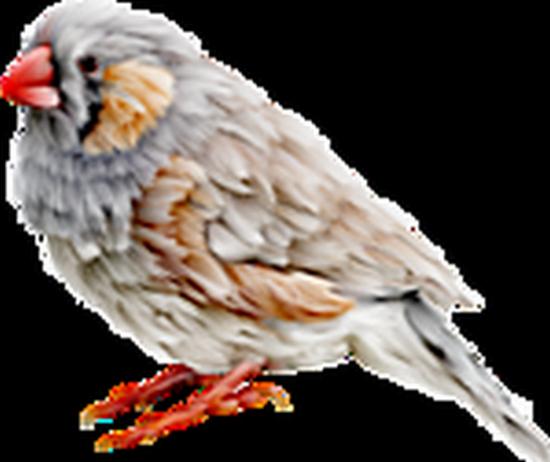 tubes_oiseaux_tiram_65