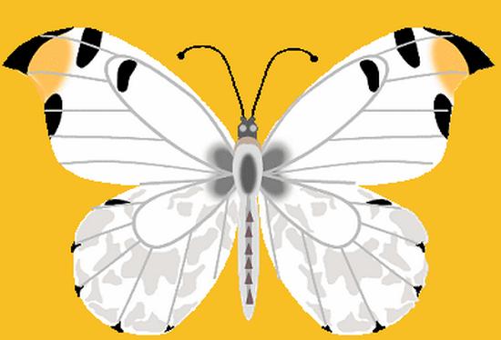 tubes_papillon_tiram_474