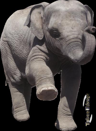 tubes_elephants_tiram_103