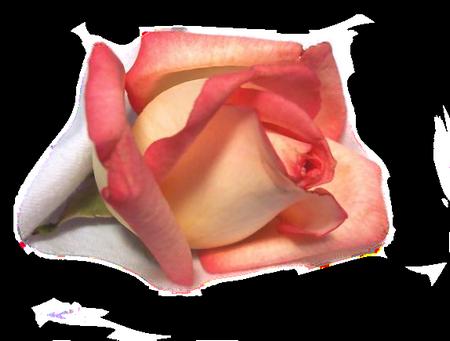 tubes_fleurs_tiram_758