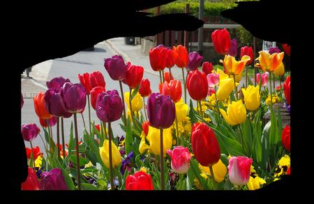 tubes_fleurs_tiram_819