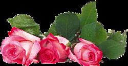 tubes_fleurs_saint_valentin_tiram_128