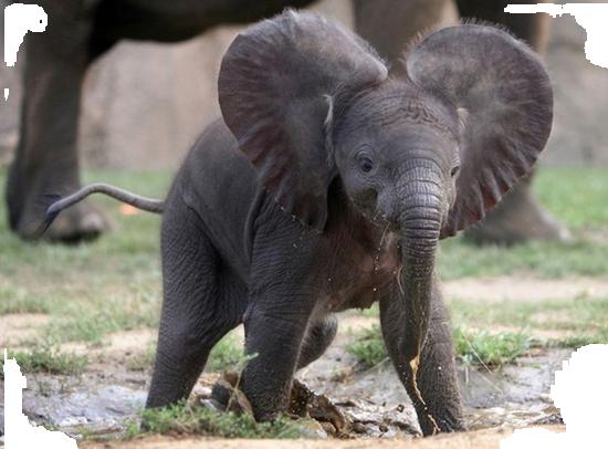 tubes_elephants_tiram_1