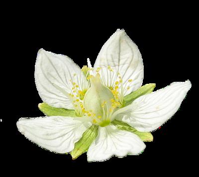 tubes_fleurs_tiram_845