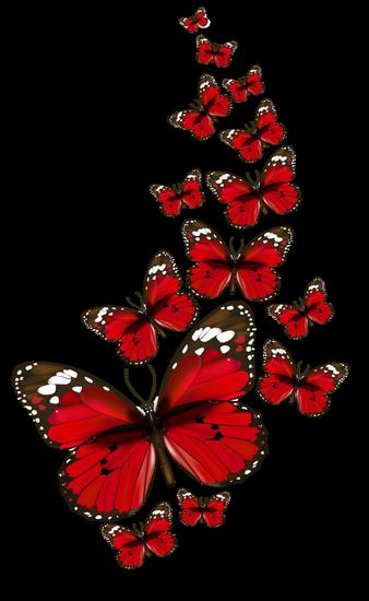 tubes_papillon_tiram_125
