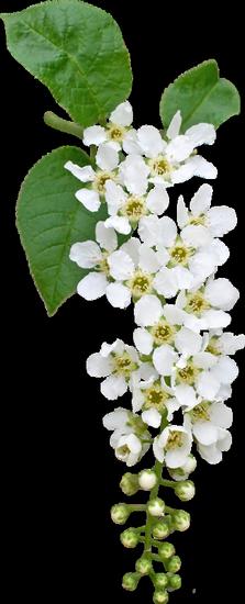 tubes_fleurs_tiram_44