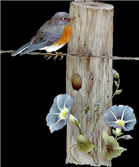 tubes_oiseaux_tiram_100