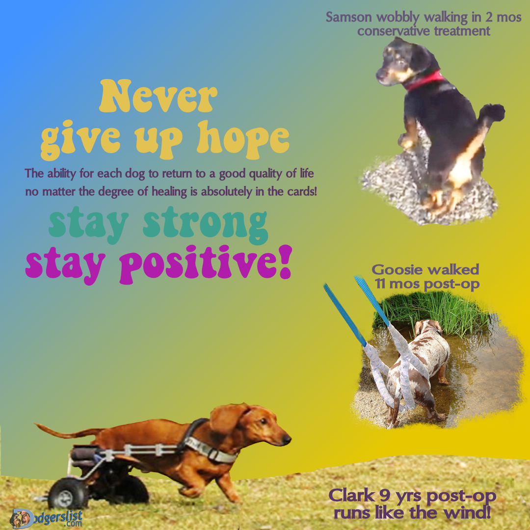 http://image.ibb.co/bLVXT6/Never_give_up.jpg