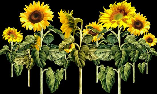 tubes_fleurs_tiram_82