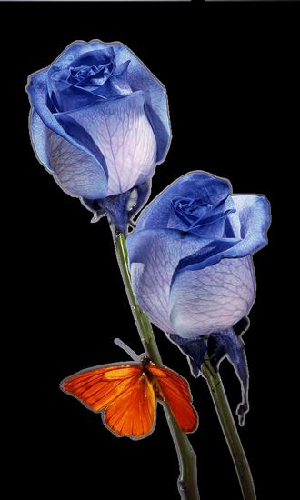 tubes_fleurs_tiram_292