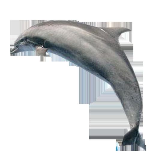 tubes_dauphins_tiram_175