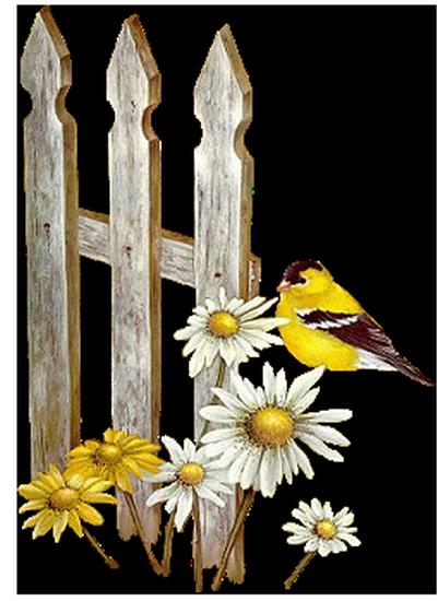 tubes_oiseaux_tiram_104