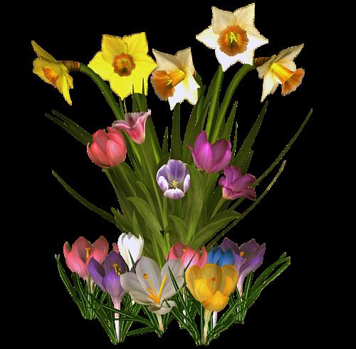 fleurs_paques_tiram_144