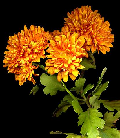 tubes_fleurs_tiram_931
