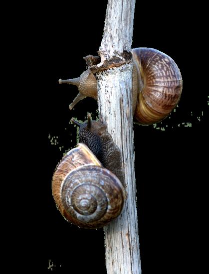 tubes_escargots_tiram_139