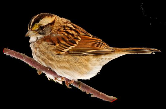 tubes_oiseaux_tiram_41