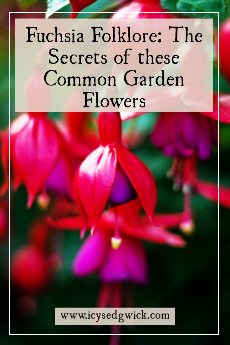 The humble fuchsia is a beautiful flower in many British gardens. What folklore and legends surround these wonderful plants? Click here to find out.