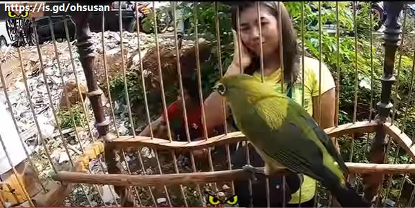 cewek pelihara burung dalam sangkar